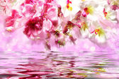 Gorgeous pink and white orchids over the water — Stock Photo