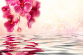 Cute soft pink orchids over the water — Stock Photo