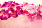Romantic pink and purple orchids — Stock Photo