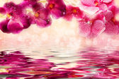 Charming lilac and pink orchids over the water — Stock Photo