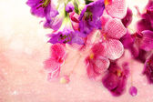 Charming bouquet orchids on a pink background — Stock Photo