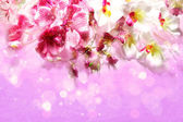 Pink and white orchids on a festive lilac background — Stock Photo