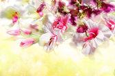 Branche de fleurs sur fond jaune ensoleillé — Photo