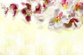 White orchids on a soft yellow background — Stock Photo