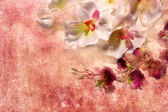 Orchids on a grunge background — Stock Photo