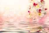 White orchids over the water on a soft pink background — Stock Photo