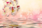 White orchids over the water — Stock Photo