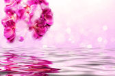 Purple orchids over the water — Stock Photo