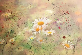 Chamomile flowers with watercolor splashes — Stock Photo