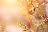 Spring twigs in the morning — Stock Photo