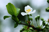 Flowering twig in spring at cold sunrise — Stock Photo