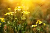 Cute yellow flowers — Stock Photo