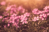 Cute violet flowers in vintage style — Stock Photo