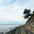 Tree on a rock over the sea — Stock Photo #27724921