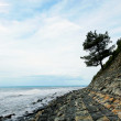 Tree on a rock over the sea — Stock Photo