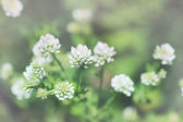 Cute white small flowers — Stock Photo