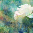 Grunge artwork with white rose and colorful watercolor smudges — Stock Photo