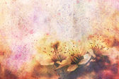 Artwork with fragile beautiful apricot tree flowers and watercolor strokes — Stock Photo