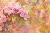 Kresba s krásné růžové květy a akvarel drmolit — Stock fotografie
