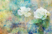Grunge artwork with white rose flowers and colorful watercolor strokes — Stock Photo