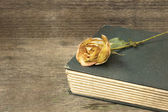 Old book and withered rose — Stock Photo