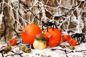 Scary decorations for halloween — Stock Photo