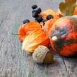 Autumn crop close up: pumpkins, nuts, cape gooseberries — Stok fotoğraf