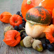 Pumpkins, nuts, cape gooseberries. autumn crop — Stock Photo
