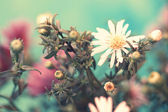 Tender white aster — Stock Photo