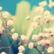 Vintage lovely small white flowers close up — Stock Photo
