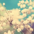 Vintage airy small white flowers close up — Stock Photo