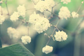 Adorable small white flowers close up — Stock Photo