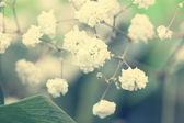 Urocze małe, białe kwiaty z bliska — Zdjęcie stockowe