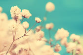 Vintage airy white flowers close up — Stock Photo