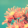 Red autumn flowers in vintage style — Stock Photo