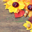 Colorful autumnal leaves and chestnuts on a wooden background — Stockfoto
