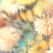 Fluffy flower bud — Stock Photo #34197661