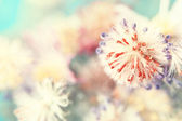 Adorable autumnal fluffy flower bud — Stock Photo