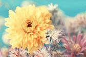 Autumnal yellow aster close up — Stock Photo