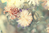 Cute dried autumnal fluffy flower buds — Stock Photo