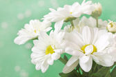 Lovely chamomiles on a soft green background — Stock Photo