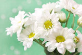 Chamomile's flowers in pale green pastel tones — Stock Photo