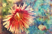 Grunge artwork with daisy and watercolor splatter — Stock Photo