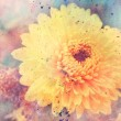 Artwork with yellow aster flower close up and watercolor splatter — Stock Photo #38112261