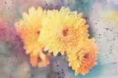 Ilustraciones con áster amarillo y manchas acuarelas — Foto de Stock