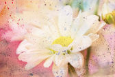 Artwork with chamomile close up and watercolor splatter — Stock Photo