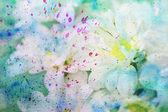 Scenic artwork with gentle chamomiles — Stockfoto