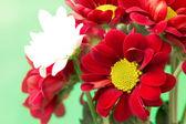 Beautiful deep red flower close up — Stock Photo
