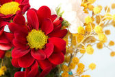 Bright red daisy and mimosa twigs — Stock Photo