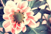 Cute pale pink flowers in vintage style close up — Stock Photo
